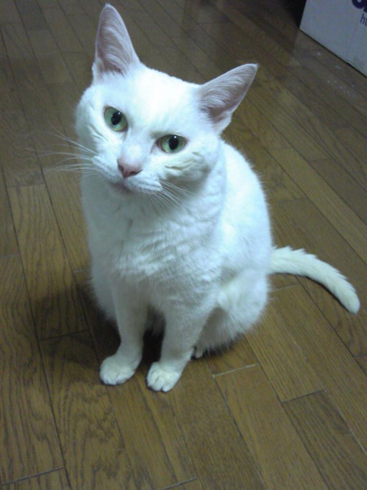 猫 歯周病 死ぬ